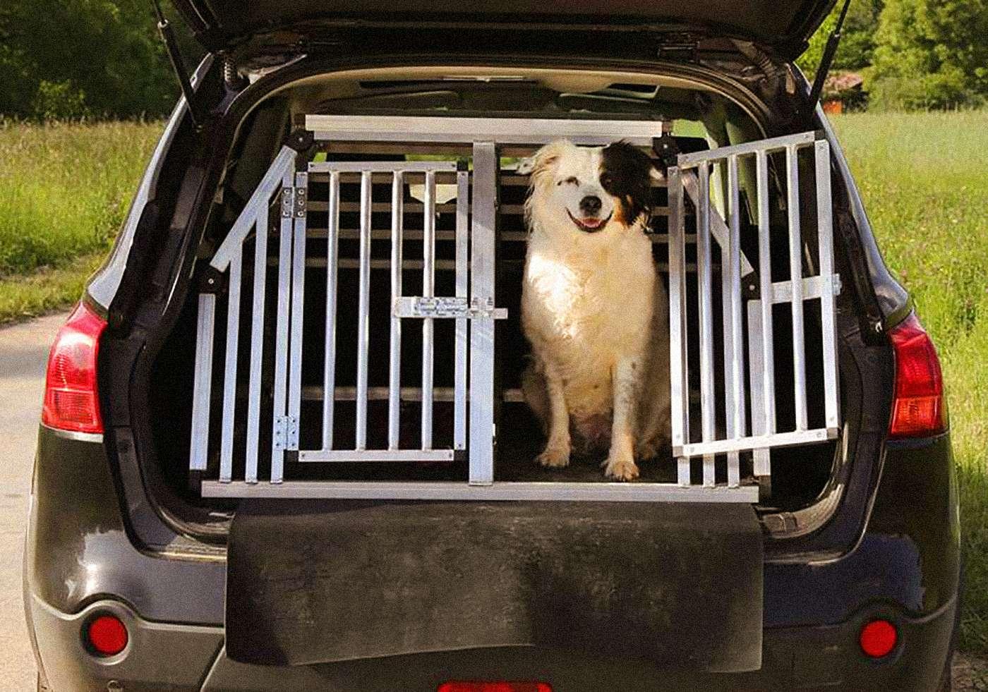 Hund på biltur