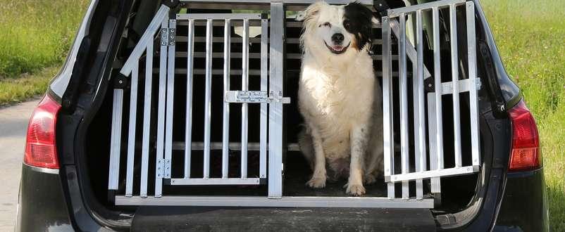 Hund som er forsikret i Frende titter ut av bur i bil