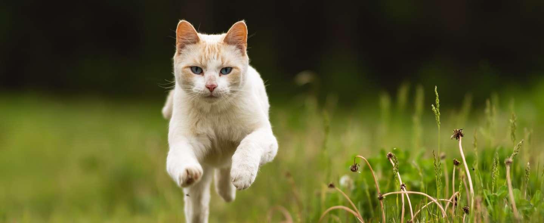 Katt James Hammond Unsplash.jpg