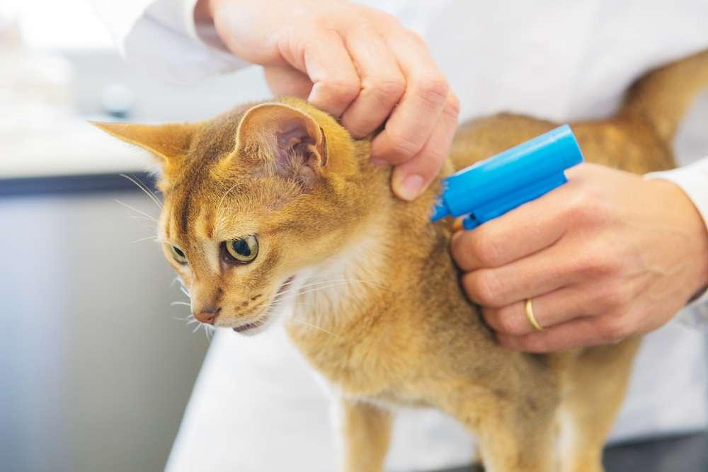 Katt forsikret i Frende ID-merkes