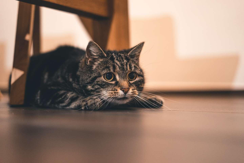 katt øyne.jpg