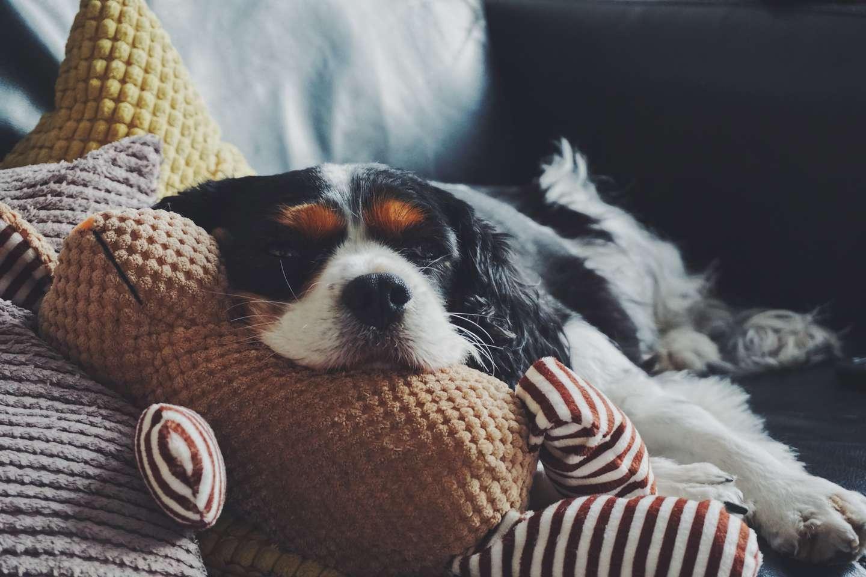 øyne hund.jpg