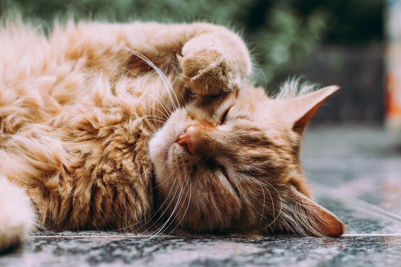 sår katt.jpg