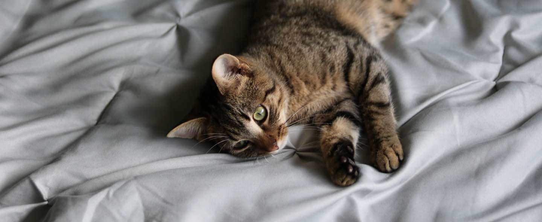 slapp katt.jpg