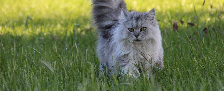 typisk katteferie.jpg